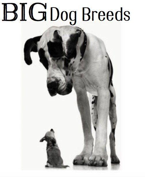 Grandi informazioni e foto della razza del cane