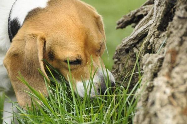List of plants poisonous to dogs