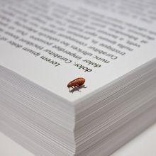 Pulci di carta - tutto su questi mitici insetti