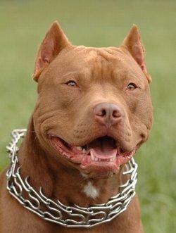 Cane imprevedibile equivale a cane pericoloso