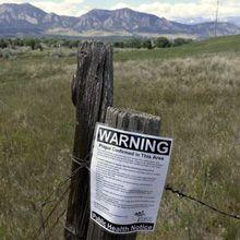Peste trovata nelle pulci arizona - quanto sei preoccupata?