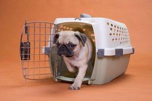 Preparare il cane per viaggiare in gabbia