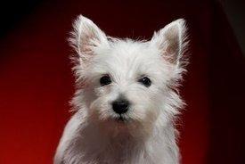 Zucca rassoda le feci dei cani