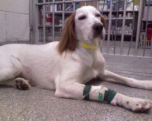 Dire addio per sempre: come faccio a sapere se è ora di eutanasia il mio cane?