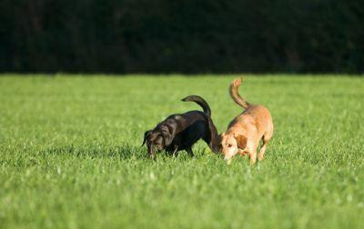 Gioco di allenamento profumato per cani
