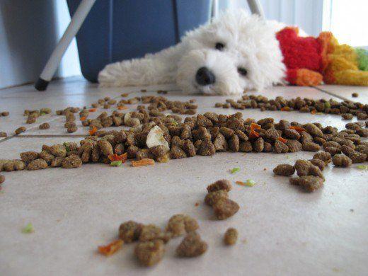 Selezione di cibo per cani di qualità