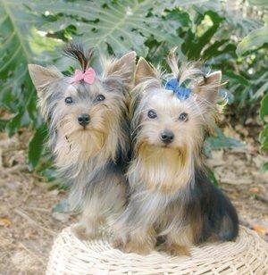 Vitamine per la crescita dei capelli nei cani