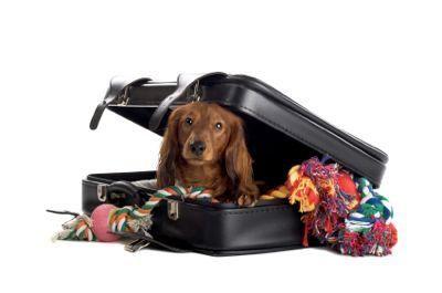 Sei consigli per viaggiare con il tuo cane