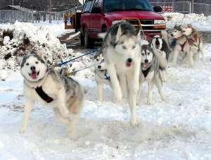Addestramento del cane da slitta