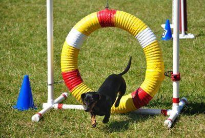 Insegna al tuo cane a saltare attraverso i cerchi