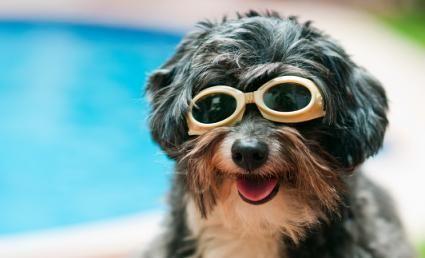 Dieci motivi per acquistare il tuo cane una piscina per bambini