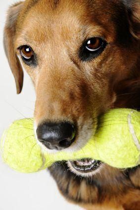 Suggerimenti per la scelta di giocattoli per cani sicuri