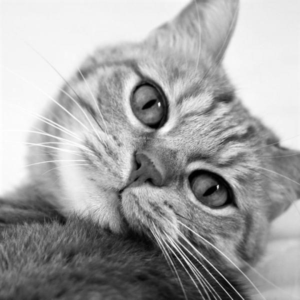 Suggerimenti per evitare che il gatto provochi vertigini in auto