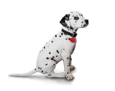 Nomi di cuccioli tradizionali
