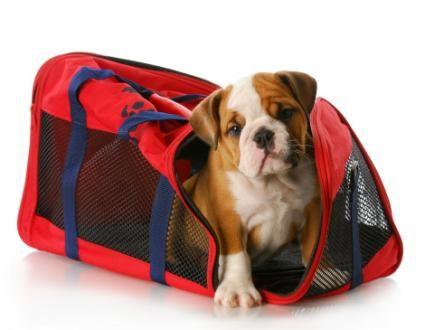 Trasporto casse di cani