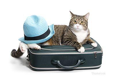 Gatto che pone sulla valigia