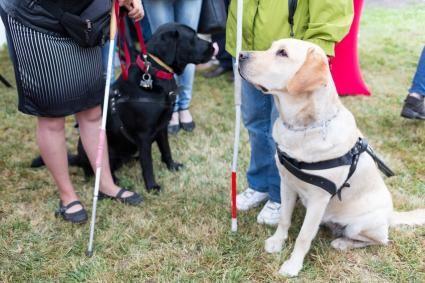 Tipi di cani da assistenza