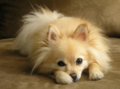 Stomaco sconvolto nei cani