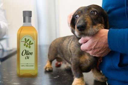 Utilizzare l`olio d`oliva per la pelle secca del cane
