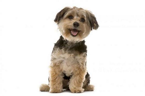 Che cosa significa se il mio cane respira velocemente?