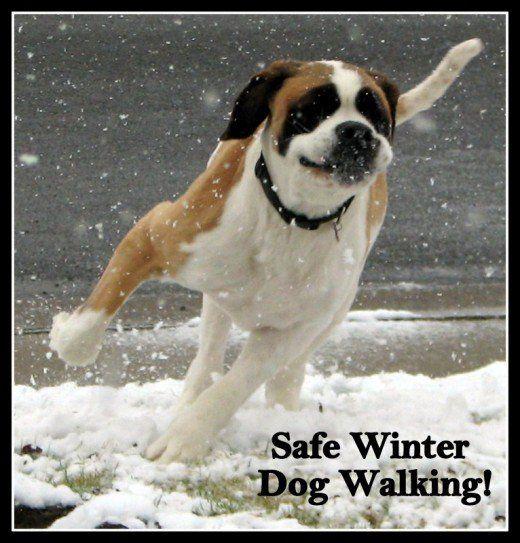 Passeggiate invernali: tieniti al sicuro