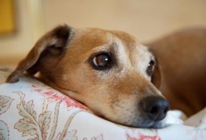Il cane più antico del mondo